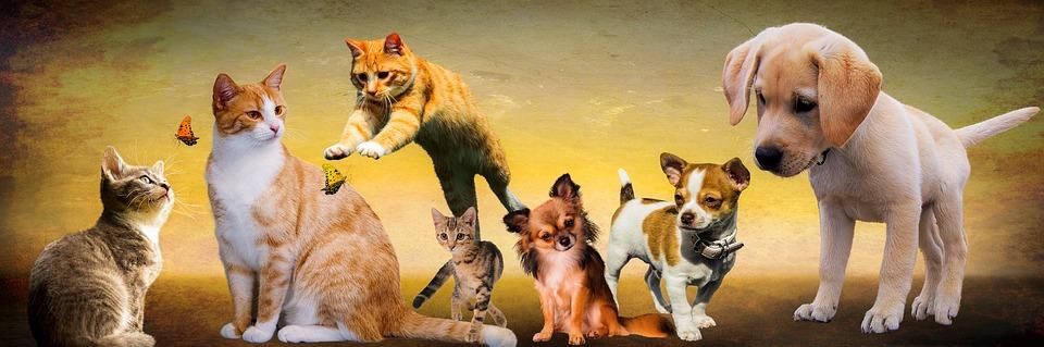 Comment travailler avec les animaux sans diplome